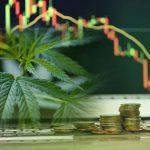 Lendületben a legális cannabisipar